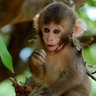 Arashiyama monkey