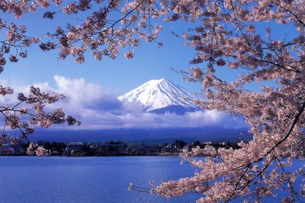 Sakura with Mt. Fuji at Lake Kawaguchi-ko